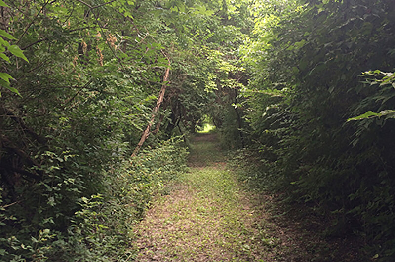 A sheltered forest path