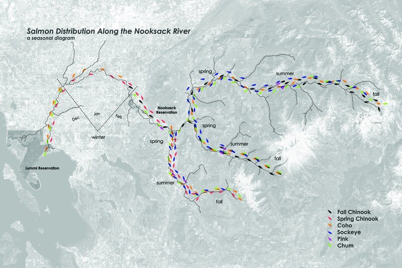Map of salmon in the Nooksack River, general thesis site in the Pacific Northwest