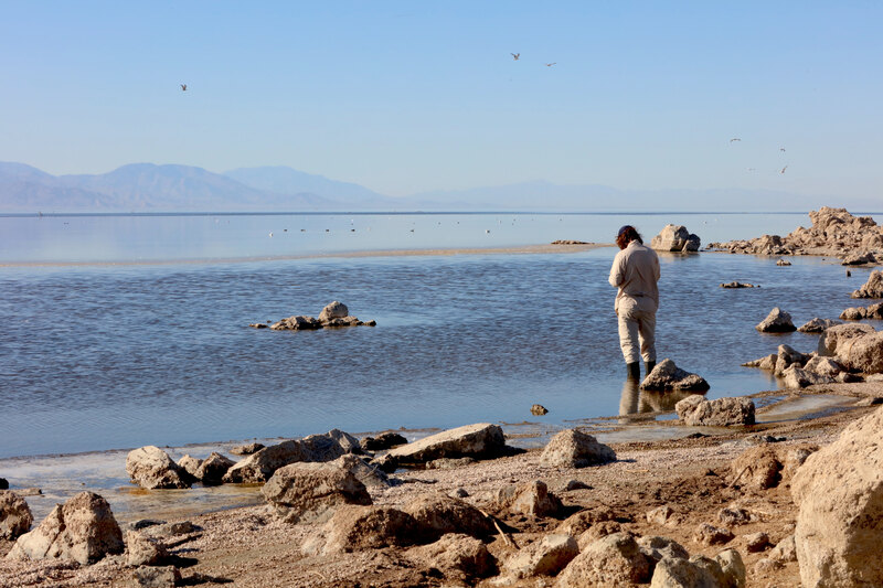 Hans Baumann collecting information as he wades is in the Salton Sea
