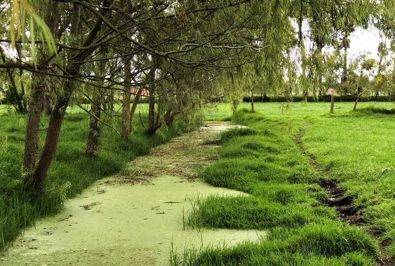 Swampy water fills a small canal in between a line of trees and a thin trench in a grassy landscape.