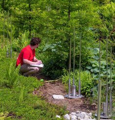 A man crouches among plants and shrubs with a clipboard