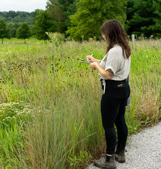 2019 CSI Research Assistant Chloe Nagraj observes a lush green landscape at Glenstone